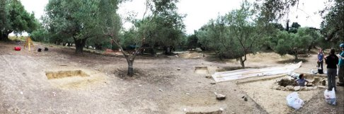 Olive grove in Pylos where agate was found.jpg