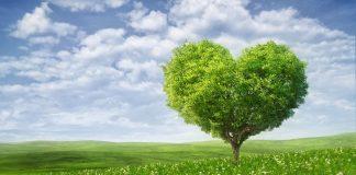 summer-heart-tree-1024x576.jpg