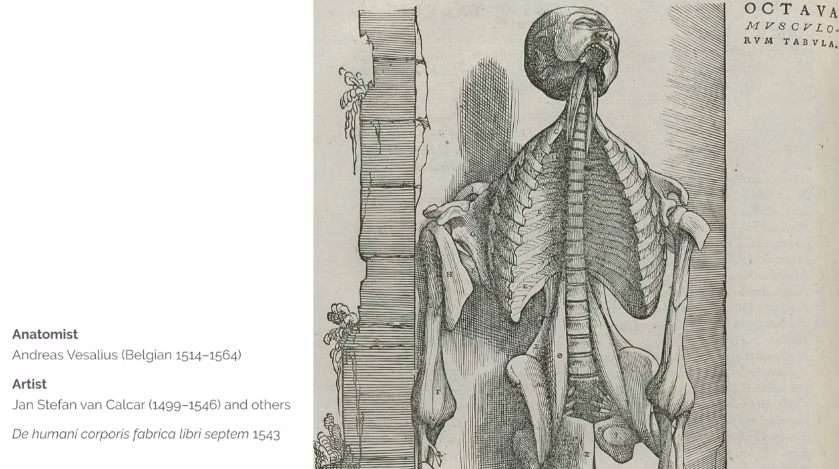 Anatomical Art Past Present Vanessa Ruiz Transientsfo