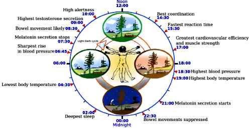 circadian-sun-earth-heart-brain
