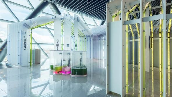 Harvesting Algae - The Rise, and Art, of Urban Algae Farms