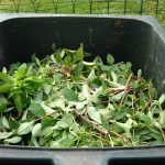 Bin - Completing the Cycle - A Guide to Composting in Urban Environments