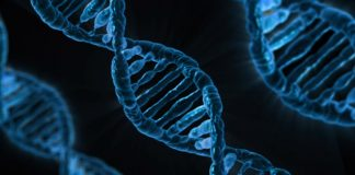 Non-Coding DNA And Why It Exists Within The Human Body