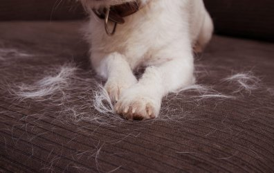 Shedding from the Vaccinated & How to Protect Yourself