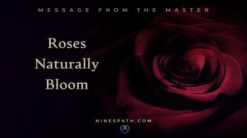 master roses bloom feat.jpg