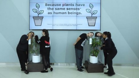 what-happens-when-you-bully-an-ikea-plant-5af02cb66119b__700_8e378dd2.jpg