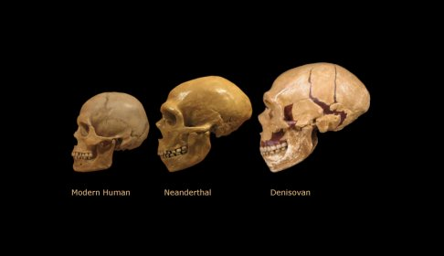 who-are-the-denisovans-and-how-does-their-discovery-alter-our-view-of-human-evolution.jpg