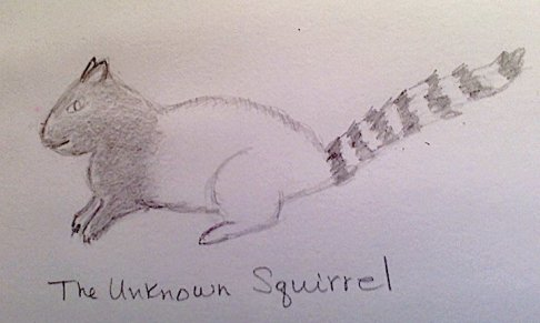 Unknown squirrel.jpg