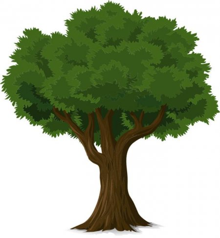 Iconic tree image.jpg