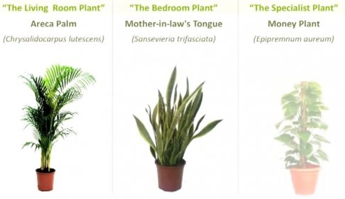 three plants to create air.jpg