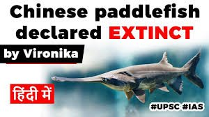 paddlefish declared extinct.jpg