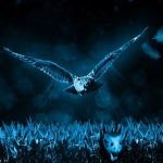 owl-517497_960_720.jpg