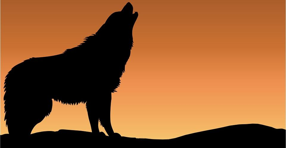 Black Wolf - Our Roles As Caretakers For A New Paradigm: The Connection To Earth & Consciousness