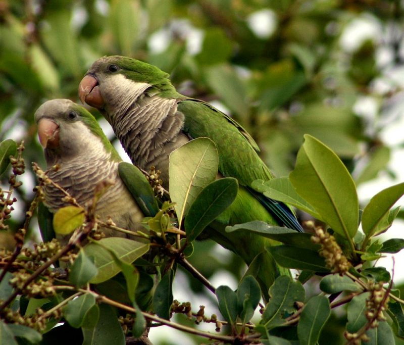 Monk Parakeets - Life as an Eagle - Earth Dragons - Multi-dimensional Trees