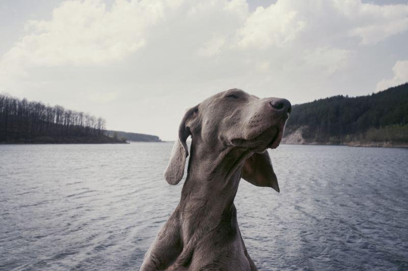 Dog - 2018 Chinese Astrology Animal Sign Forecasts 2