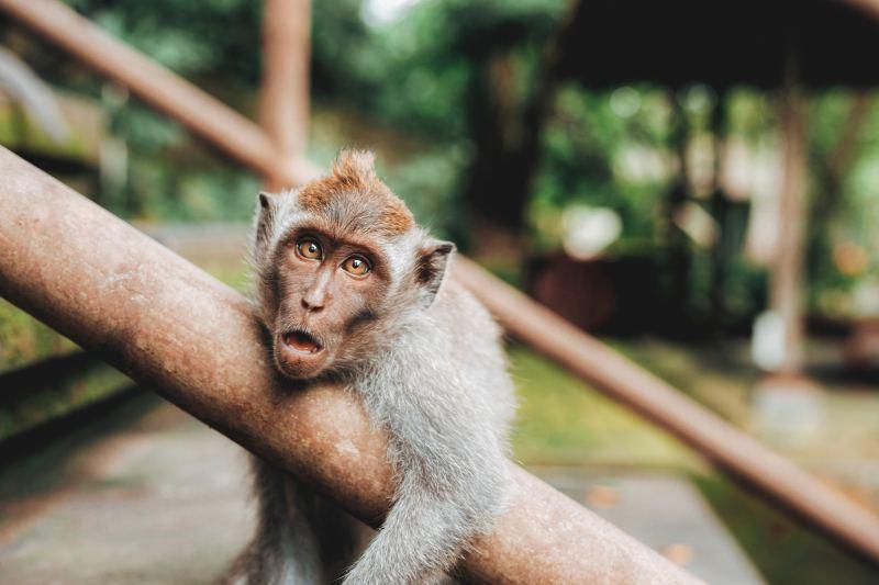 Monkey - 2018 Chinese Astrology Animal Sign Forecasts 2