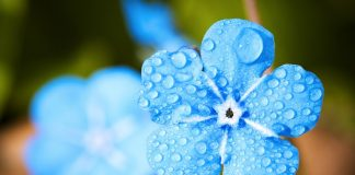 Blue Flower - Creation of Life, Medicine Woman & Original Life Water — A QHHT Session by Laron