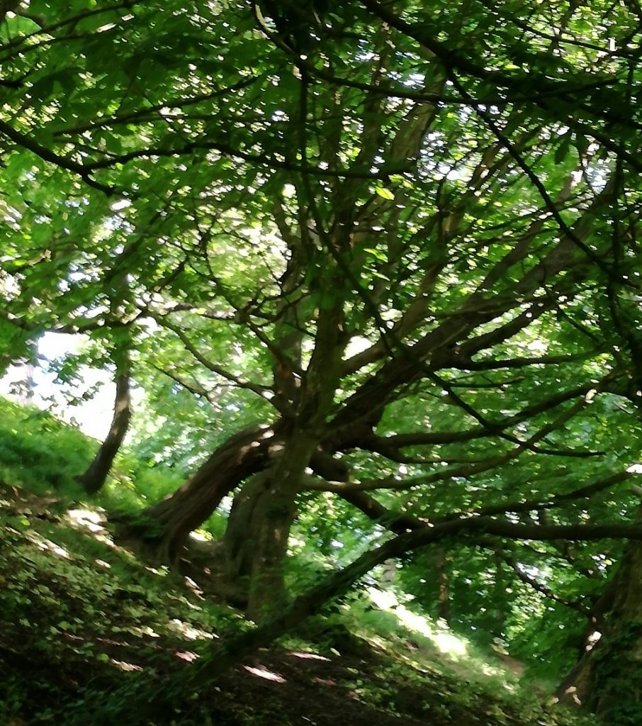 Tree - A vision-quest and the gift of the nettle plant