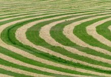 How Crop Circles are Formed